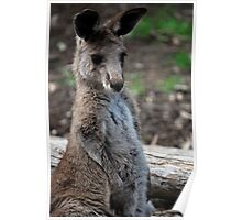 Lonley Wallaby Poster