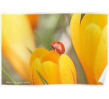 Ladybird beetle  on edge of a crocus. Coccinella septempunctata Poster