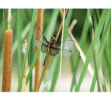 Dragonfly just hanging around. Photographic Print