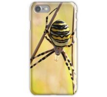 Acrobatic Wasp Spider iPhone Case/Skin