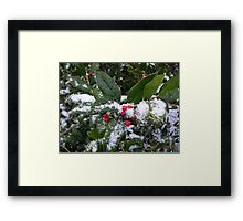 Holly in the Snow Framed Print