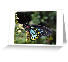 Cairns Birdwing Butterfly Male Greeting Card