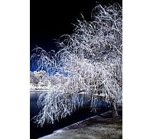 White Willow Photographic Print