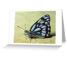 Caper White Butterfly Greeting Card