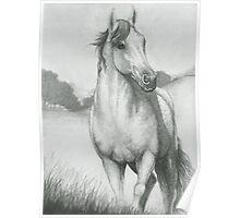 Gray Morning Horse Poster