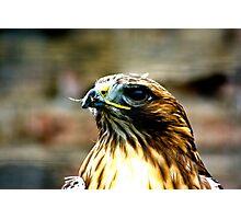 Hawk #1 Photographic Print