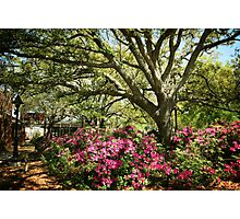 Spring in the South Photographic Print
