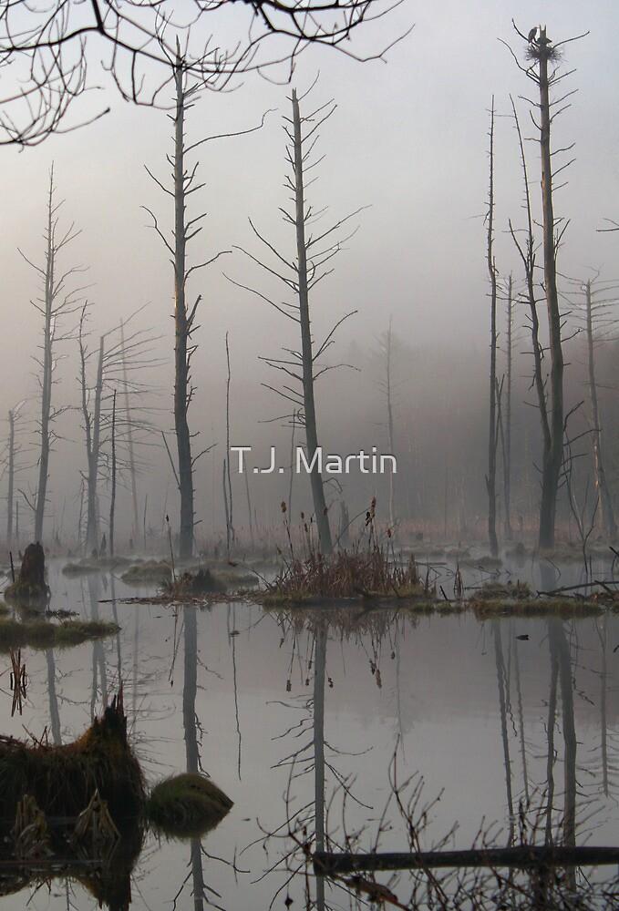 Daybreak - Blue Heron Rookery - Bridgton, Maine by T.J. Martin