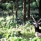A curious blackbuck by rickvohra
