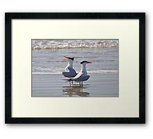 caspian tern singing on beach Framed Print