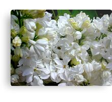White Lilacs in Bloom Metal Print