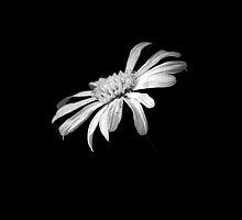 Centerpiece in the Dark by saseoche