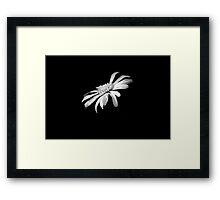 Centerpiece in the Dark Framed Print