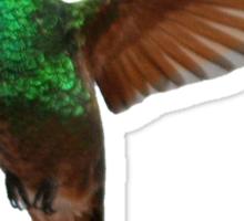 Hummingbird 2 Sticker