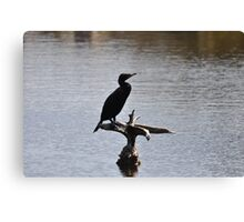 double crested cormmorant Canvas Print