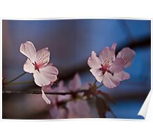 Put A Little Pink In Your Day (Pink Blossoms) Poster