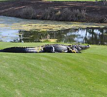 gator on the green by cetrone