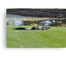 gator on the green Canvas Print