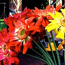 Faneuil Hall Flowers by Alexandra Sollers