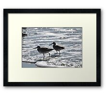 least sandpipers in the ocean Framed Print