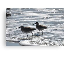 least sandpipers in the ocean Canvas Print