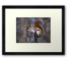 The Lookout / Red Squirrel Framed Print
