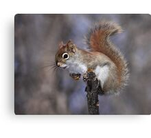 The Lookout / Red Squirrel Metal Print