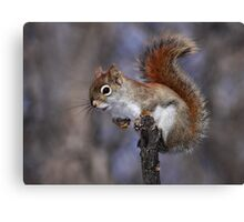 The Lookout / Red Squirrel Canvas Print