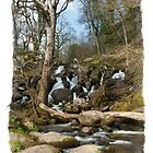 Becky Falls: Dartmoor Devon, UK. by DonDavisUK