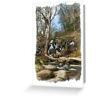 Becky Falls: Dartmoor Devon, UK. Greeting Card