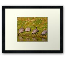 turtle party Framed Print