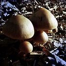 The first group of mushrooms in 2010 by alaskaman53