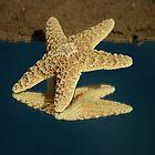 StarFish by terrebo