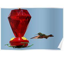 Hummingbird approaching feeder Poster