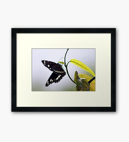 Looking for an Egg Site Framed Print