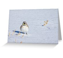 Mr. Horned Lark Greeting Card