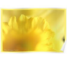 Yellow daffodil tunnel  A Poster