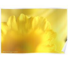 Yellow daffodil tunnel Poster