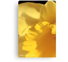 Quarter of jonquil Canvas Print