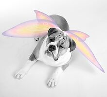 Dog Fairy by Lori2704