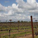 Vines of Spring by CherylBee