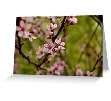 shrub flower Greeting Card