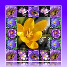 Bee, Crocus and Melting Snow Collage in Reflection Frame by BlueMoonRose