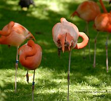 Pink Posers by Julie Everhart