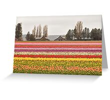 Tulip Town in the Skagit Valley Greeting Card
