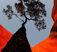 Looking Up at Uluru by pcphotoart