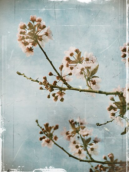 Vintage Blossoms by Tara  Turner