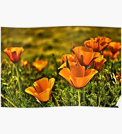 Antelope Valley Poster