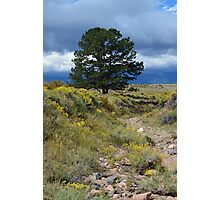 A tree in Westcliffe Photographic Print