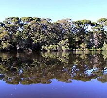 Donnelly River reflections, South West WA,  by Griffen